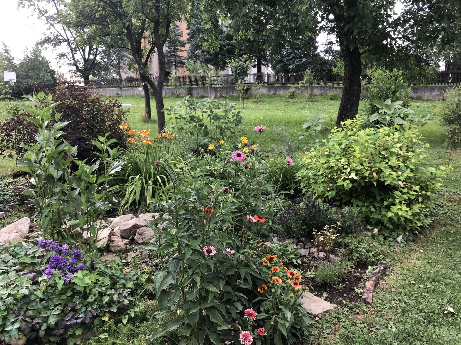 U nás doma a na zahradě 2021 - Obrázek č. 37