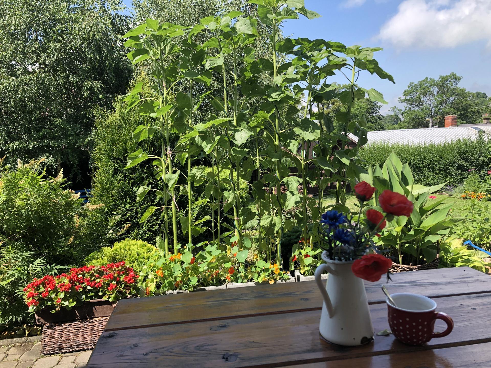 U nás doma a na zahradě 2021 - Obrázek č. 40