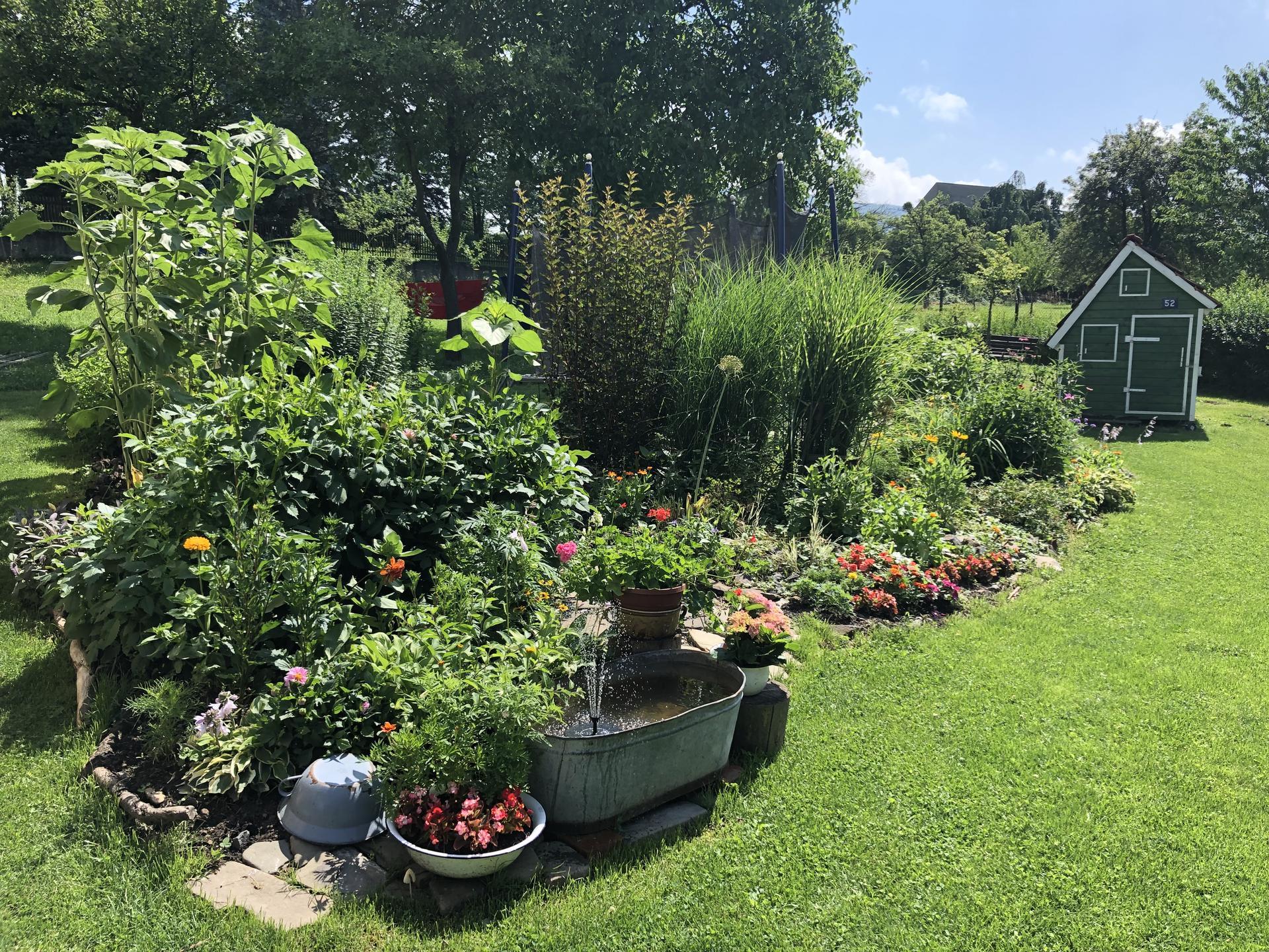 U nás doma a na zahradě 2021 - Obrázek č. 41