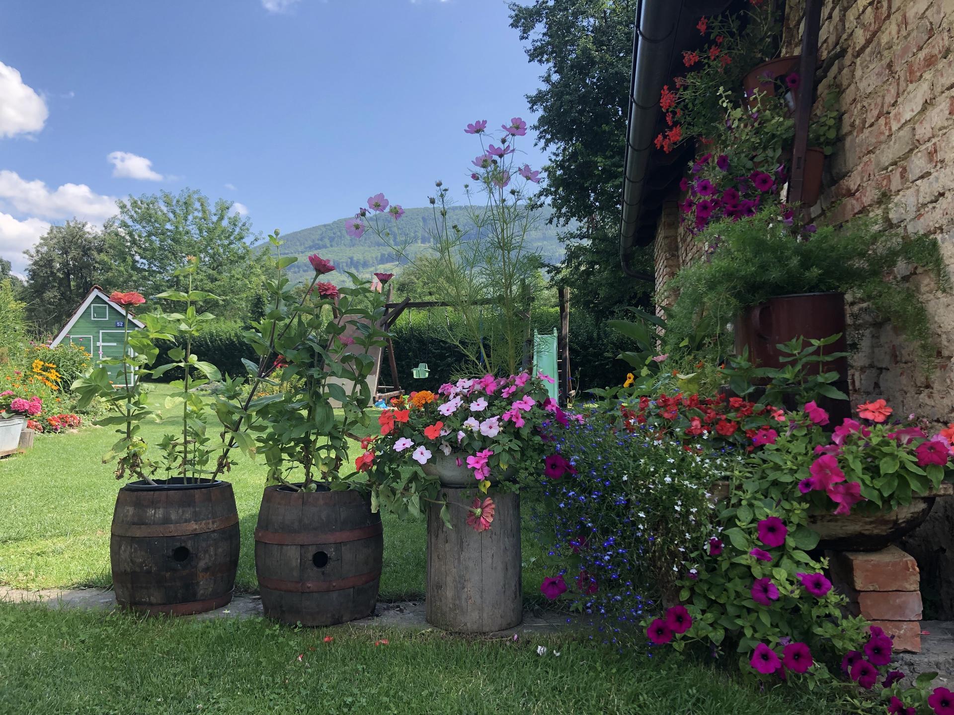 U nás doma a na zahradě 2021 - Obrázek č. 53
