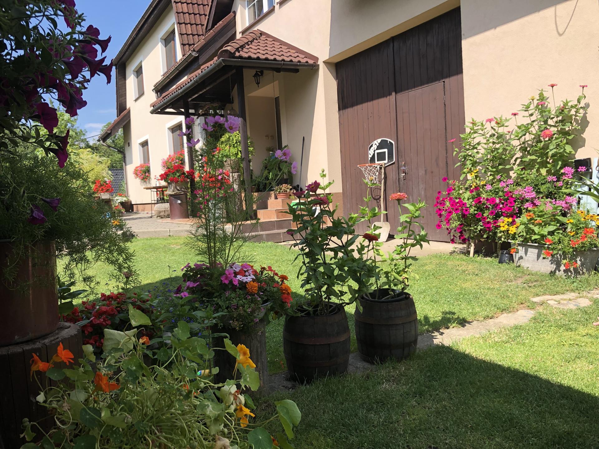 U nás doma a na zahradě 2021 - Obrázek č. 44