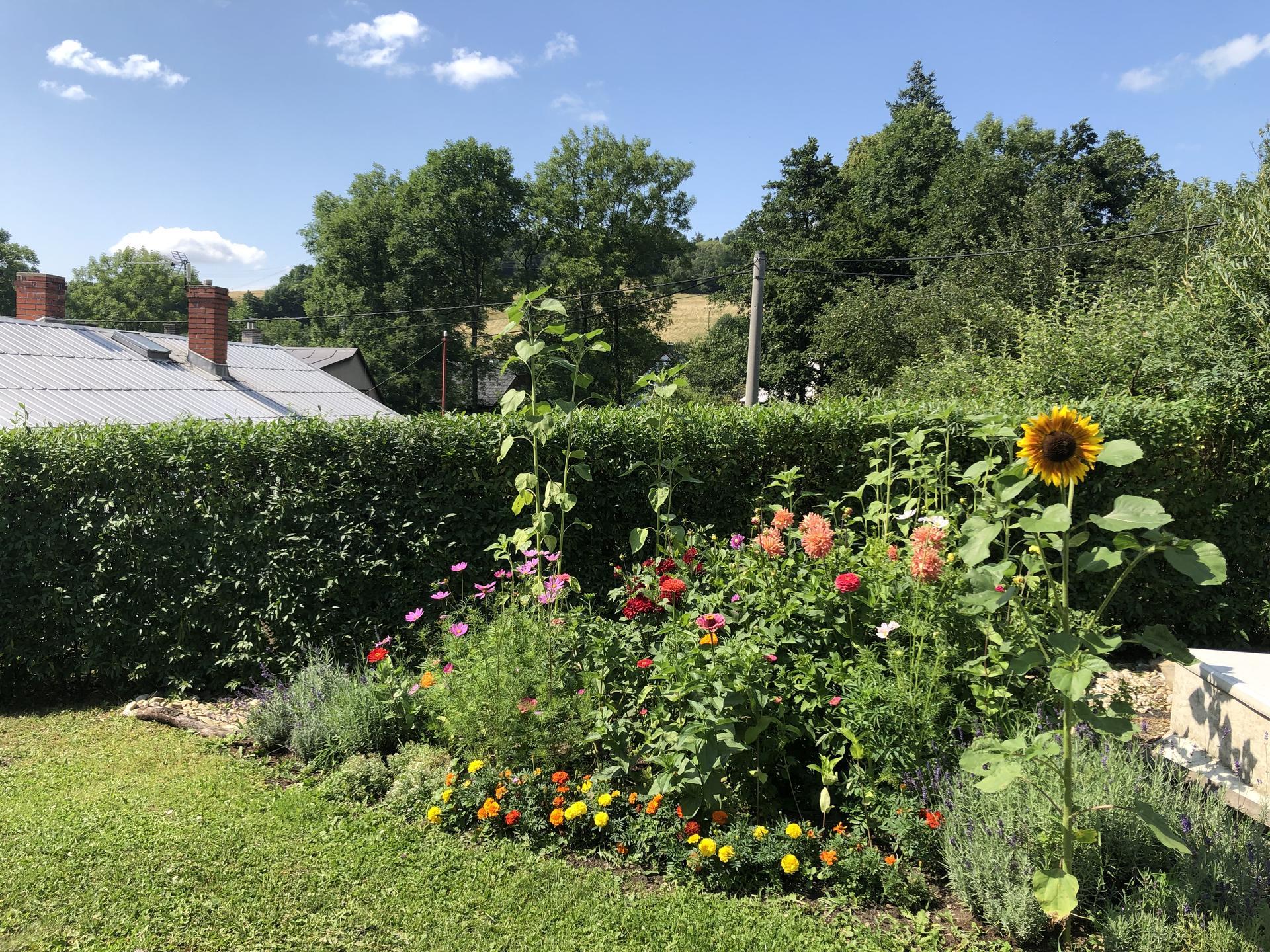 U nás doma a na zahradě 2021 - Obrázek č. 52
