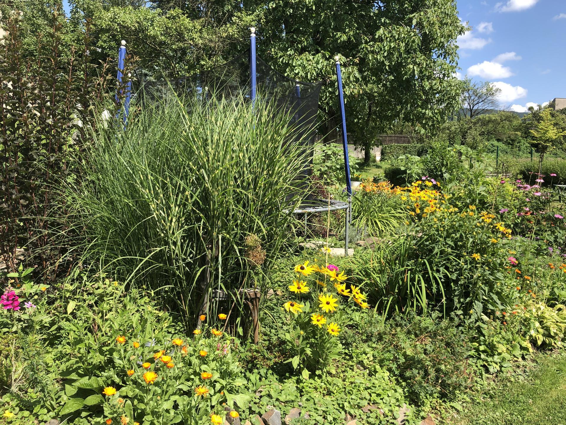 U nás doma a na zahradě 2021 - Obrázek č. 46