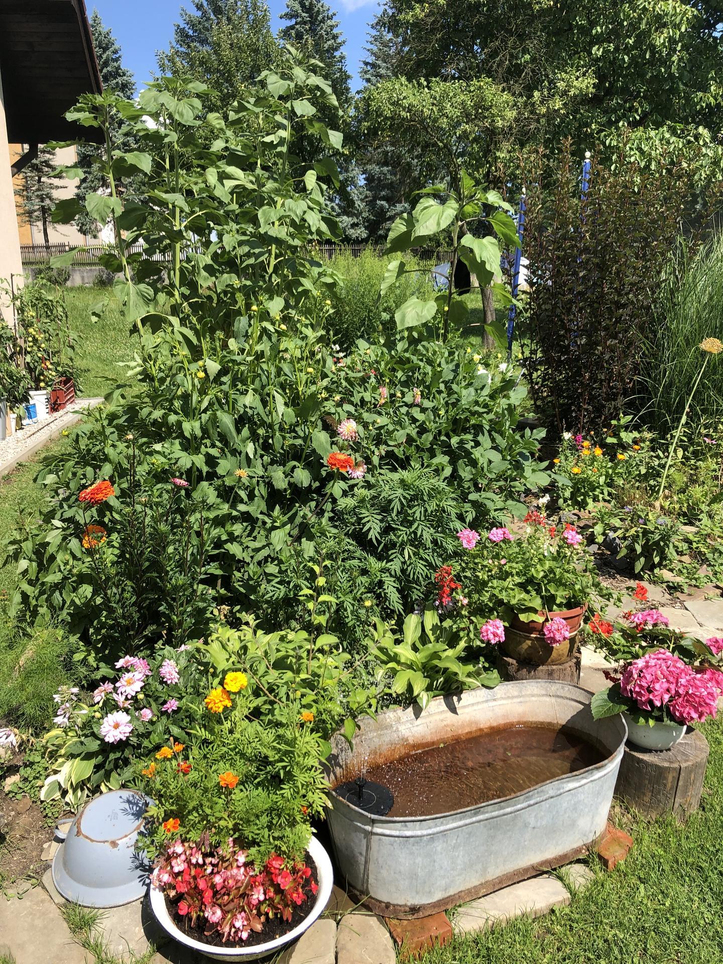 U nás doma a na zahradě 2021 - Obrázek č. 48
