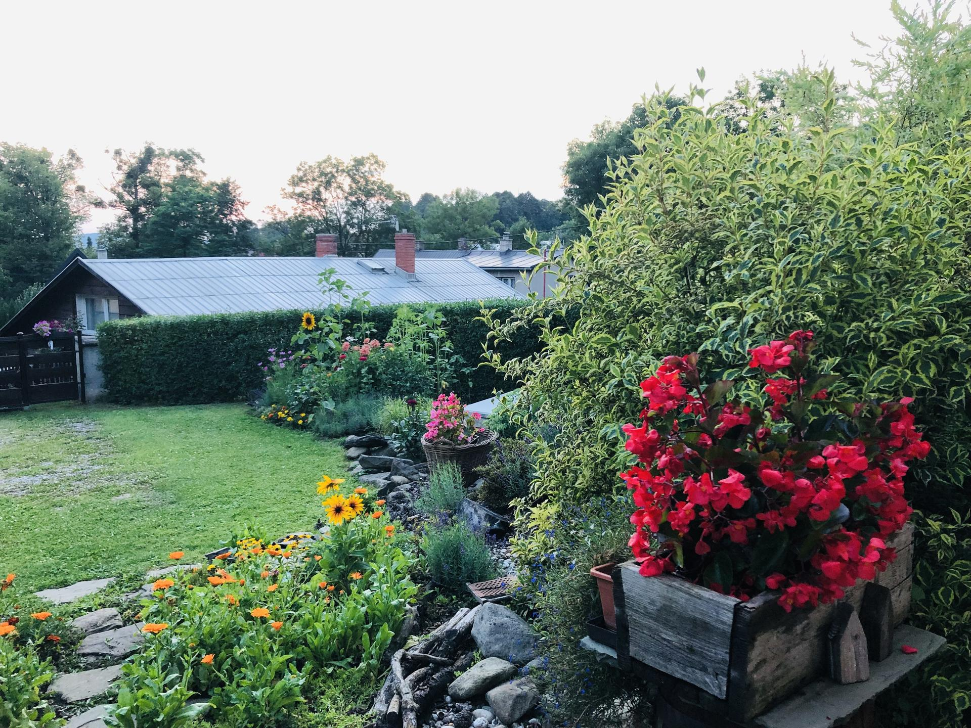 U nás doma a na zahradě 2021 - Obrázek č. 54