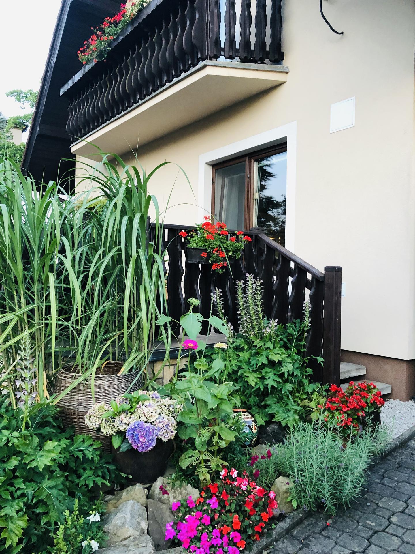U nás doma a na zahradě 2021 - Obrázek č. 60