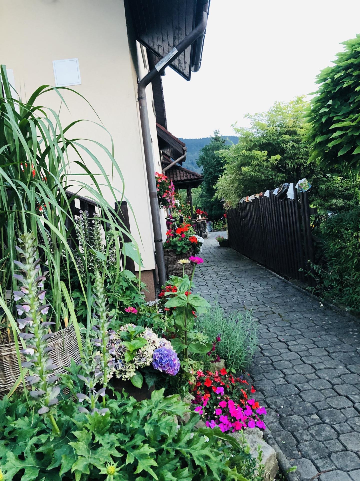U nás doma a na zahradě 2021 - Obrázek č. 61