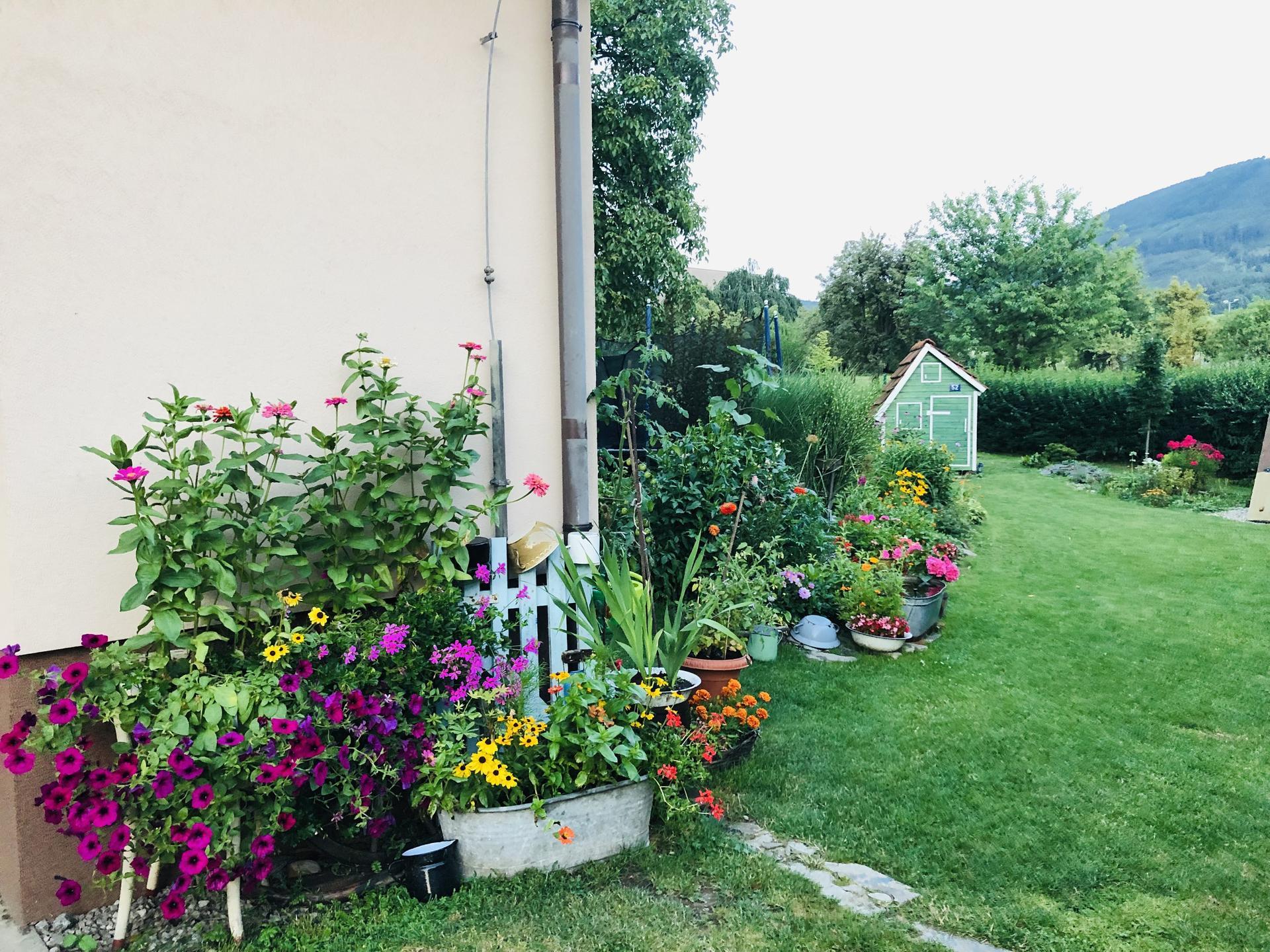 U nás doma a na zahradě 2021 - Obrázek č. 55