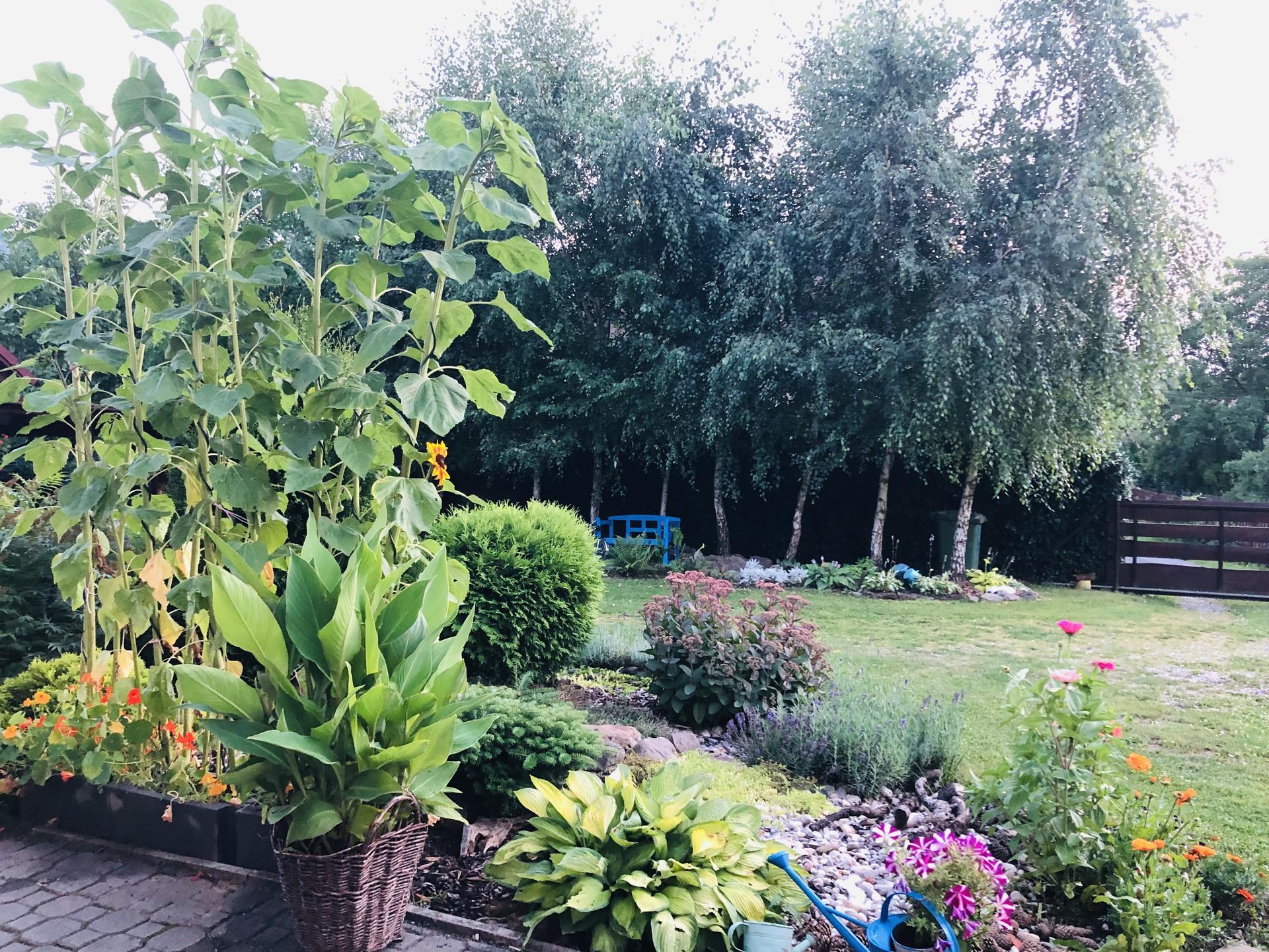 U nás doma a na zahradě 2021 - Obrázek č. 56