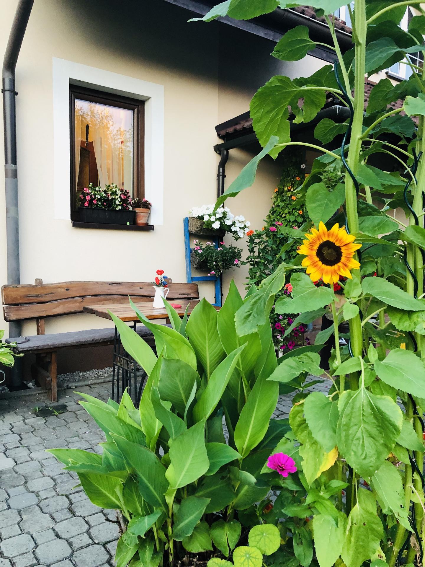 U nás doma a na zahradě 2021 - Obrázek č. 62