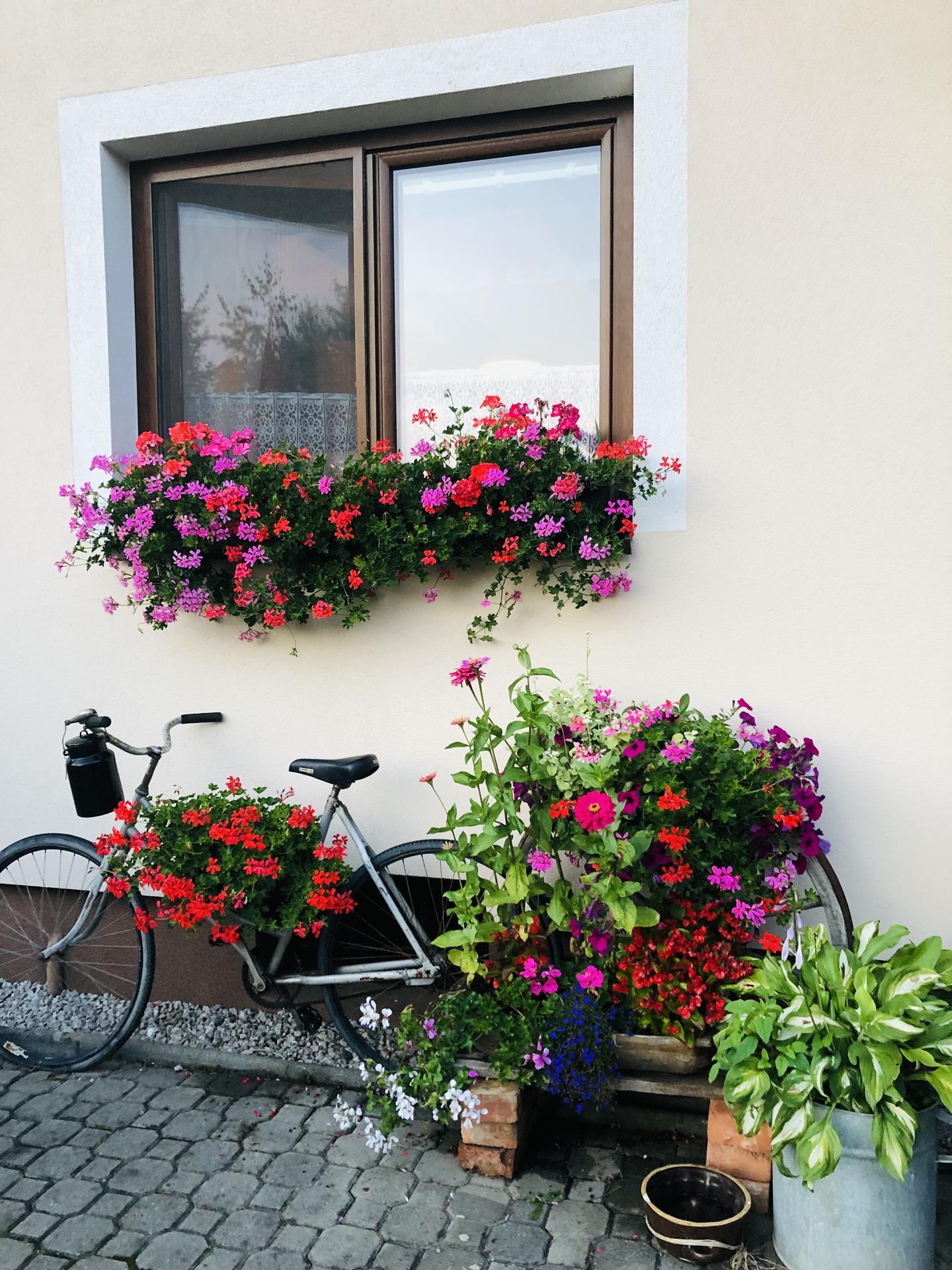 U nás doma a na zahradě 2021 - Obrázek č. 64