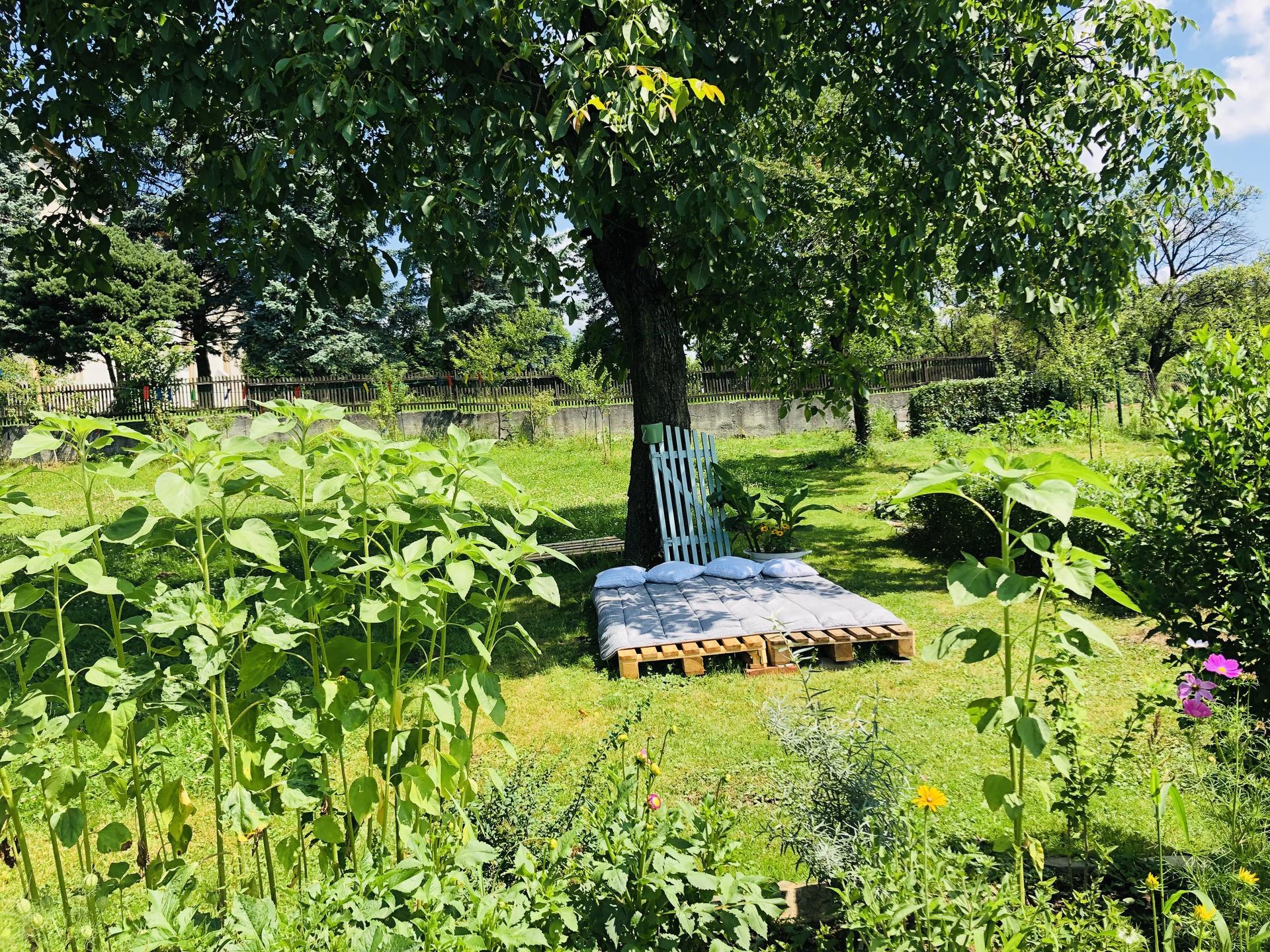 U nás doma a na zahradě 2021 - Obrázek č. 66