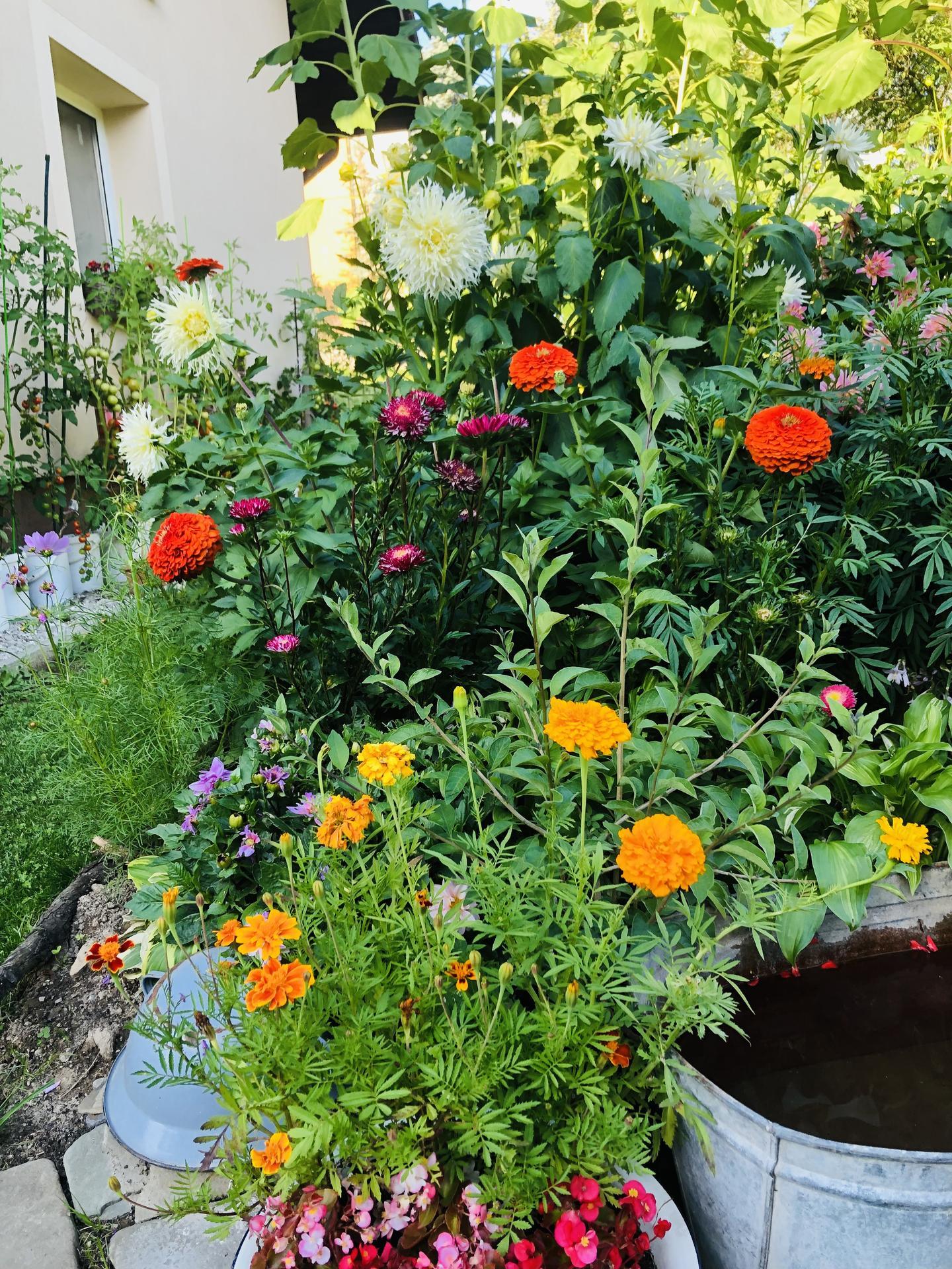 U nás doma a na zahradě 2021 - Obrázek č. 74