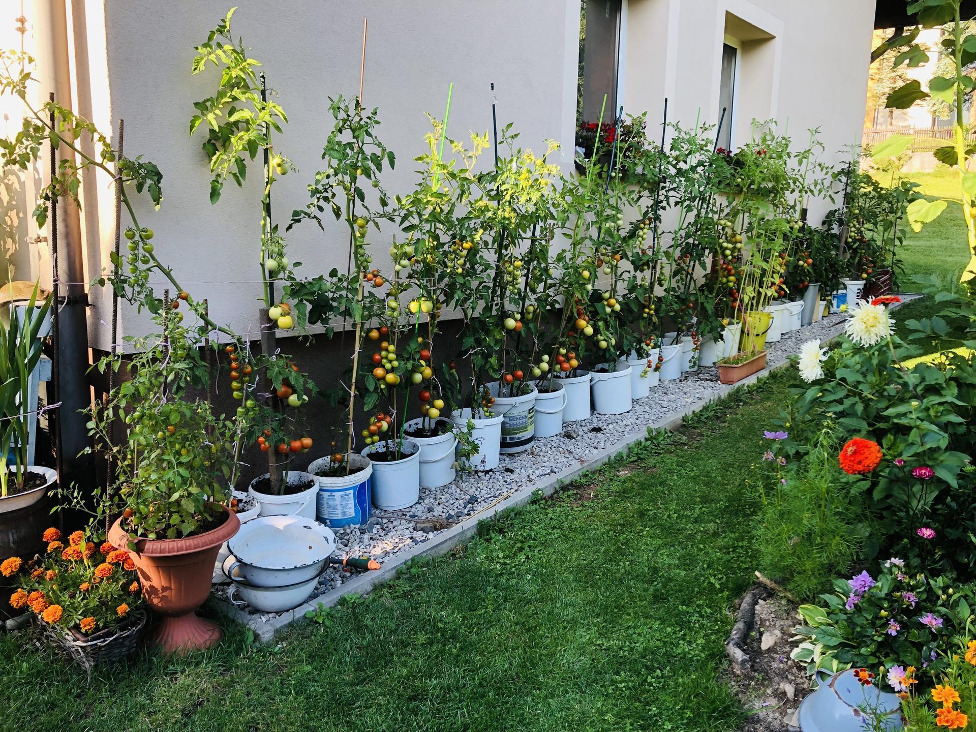 U nás doma a na zahradě 2021 - Obrázek č. 75