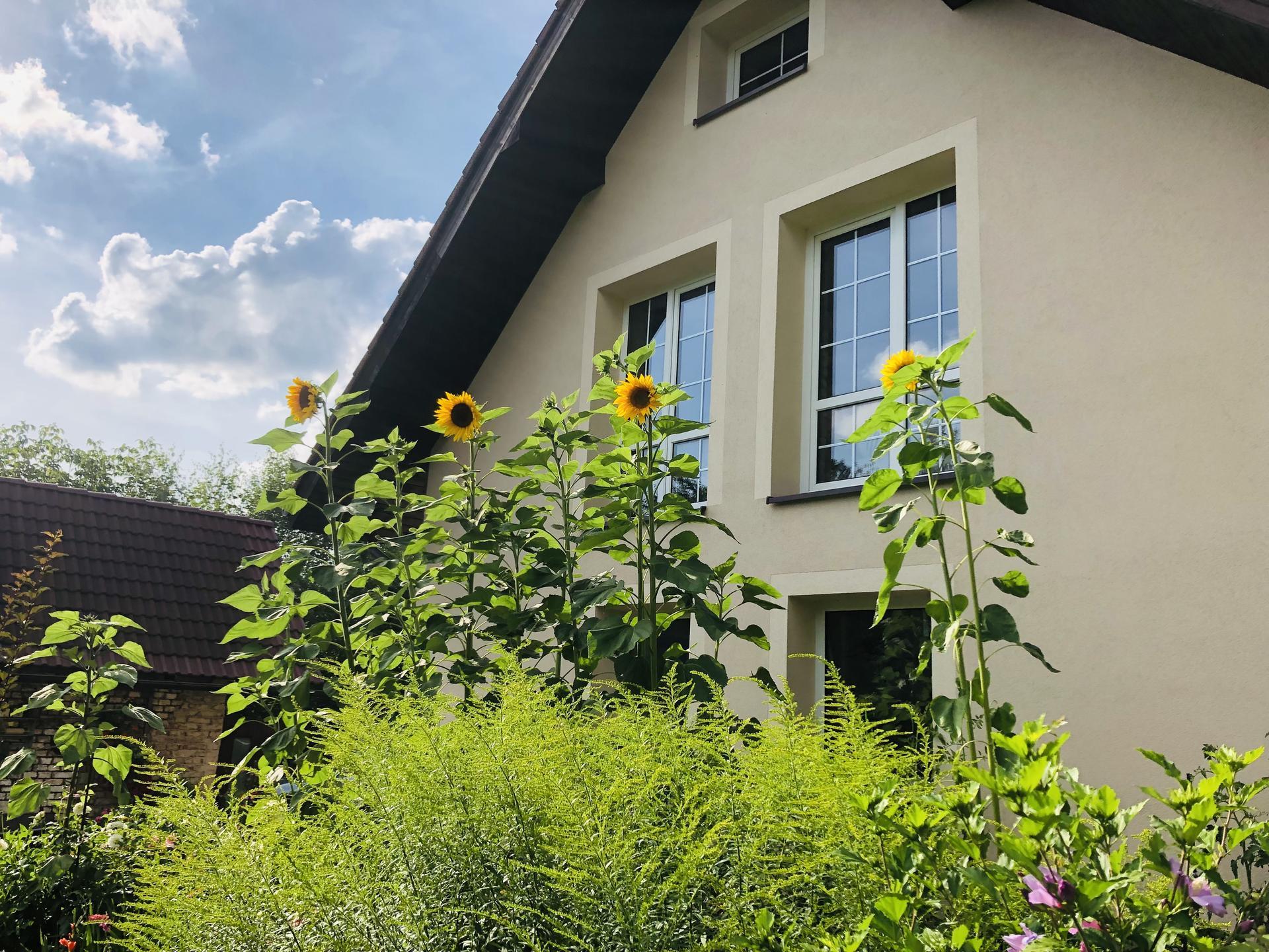 U nás doma a na zahradě 2021 - Obrázek č. 76