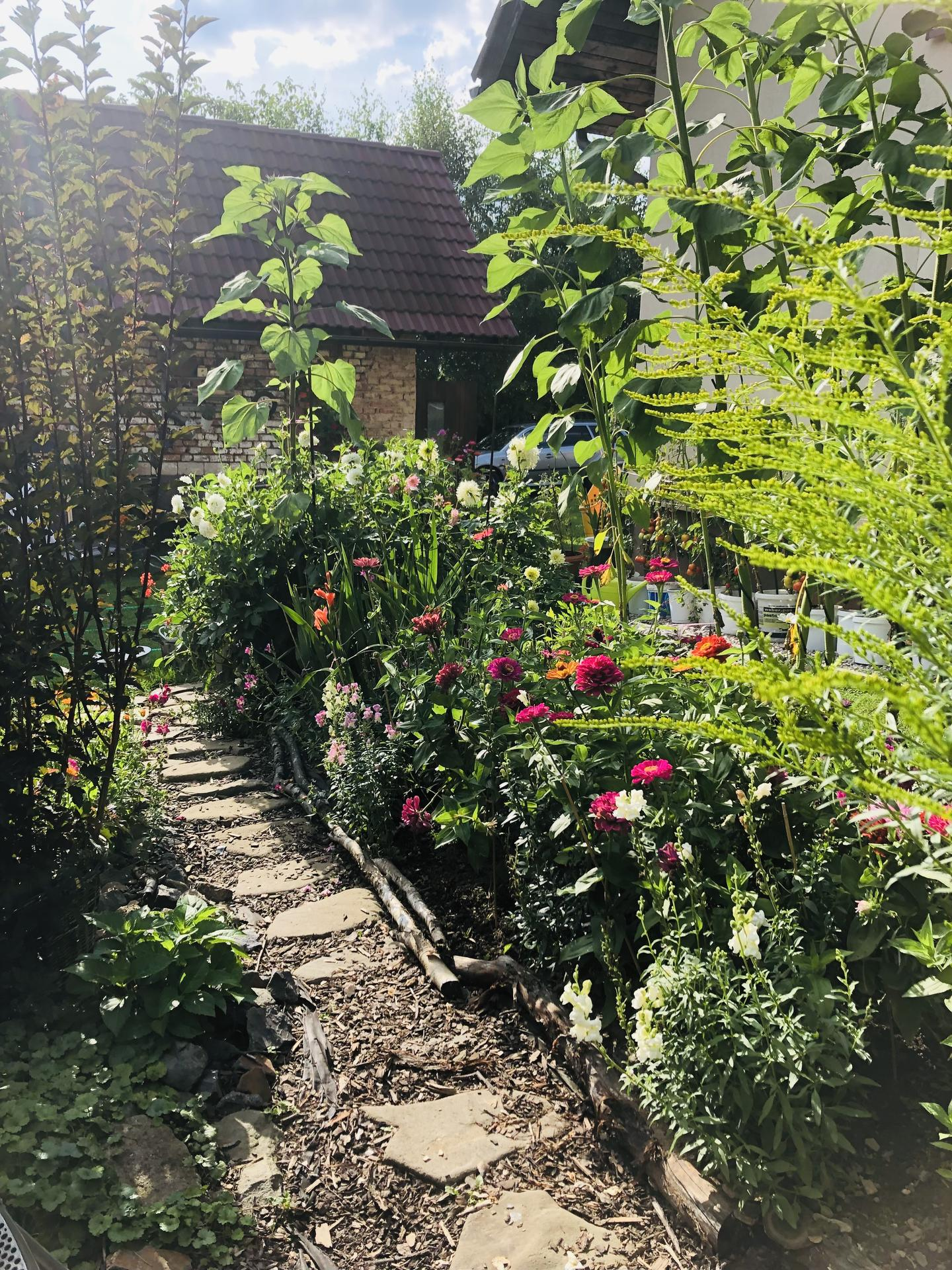 U nás doma a na zahradě 2021 - Obrázek č. 77