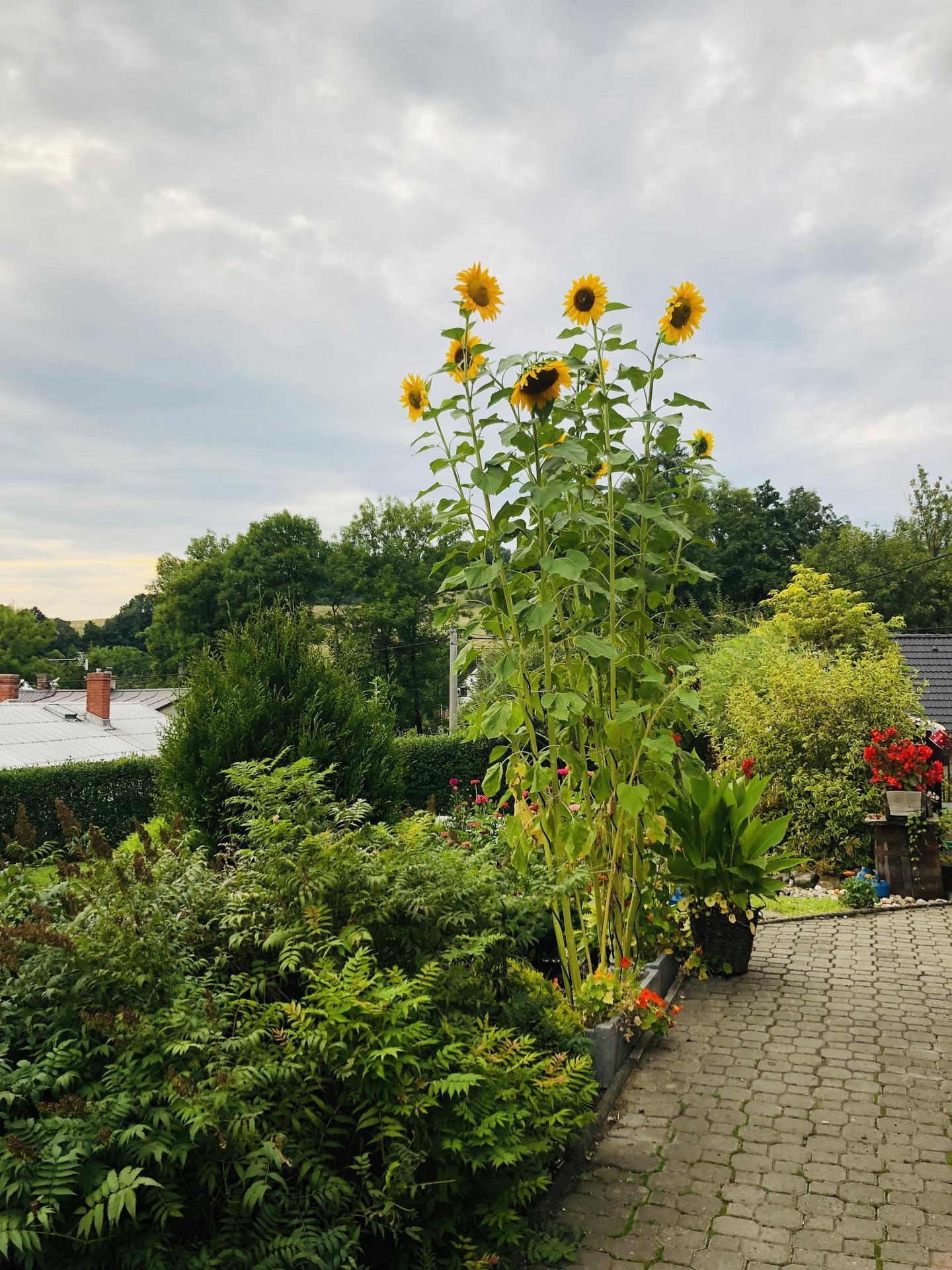 U nás doma a na zahradě 2021 - Obrázek č. 79