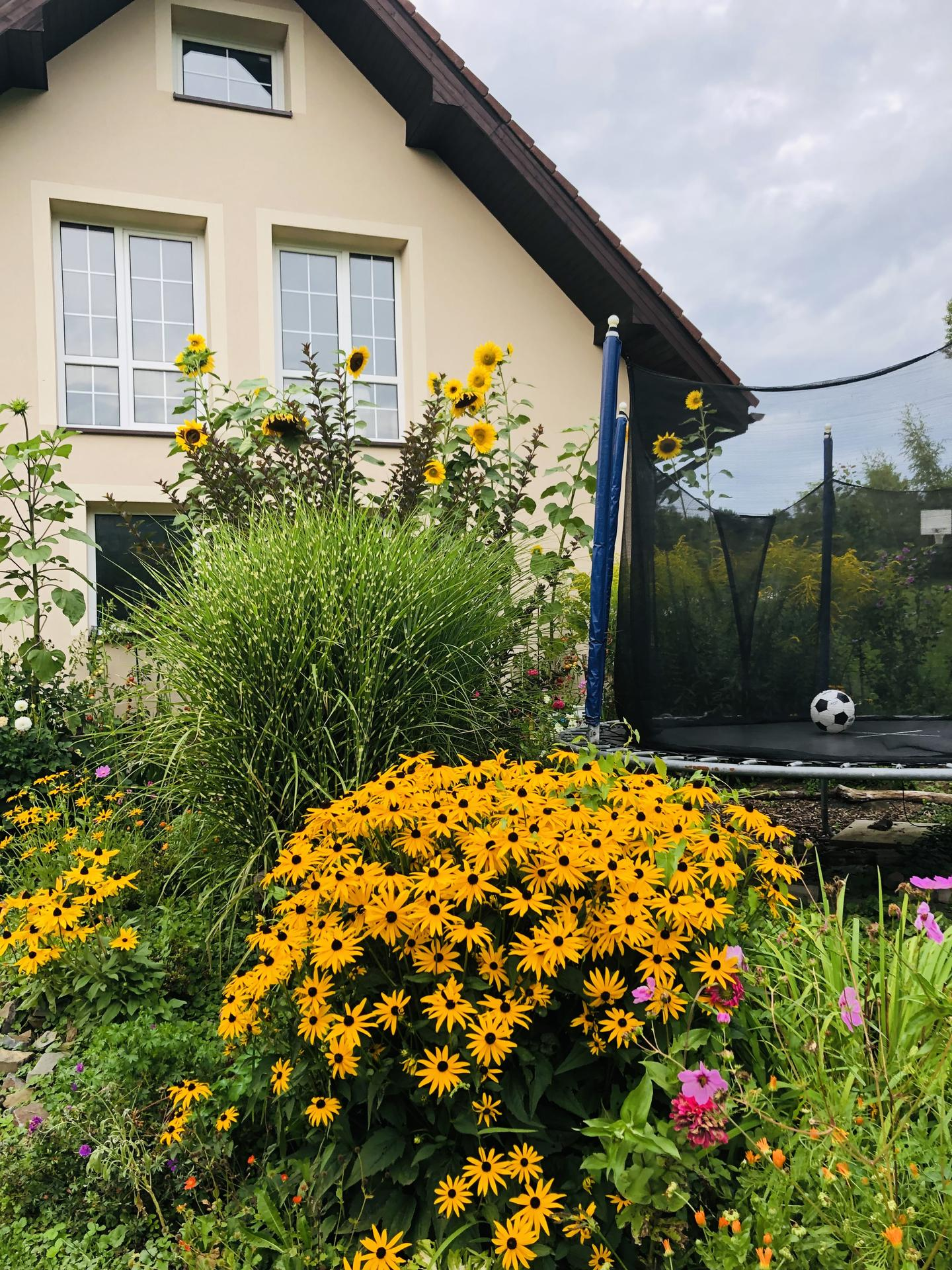 U nás doma a na zahradě 2021 - Obrázek č. 81