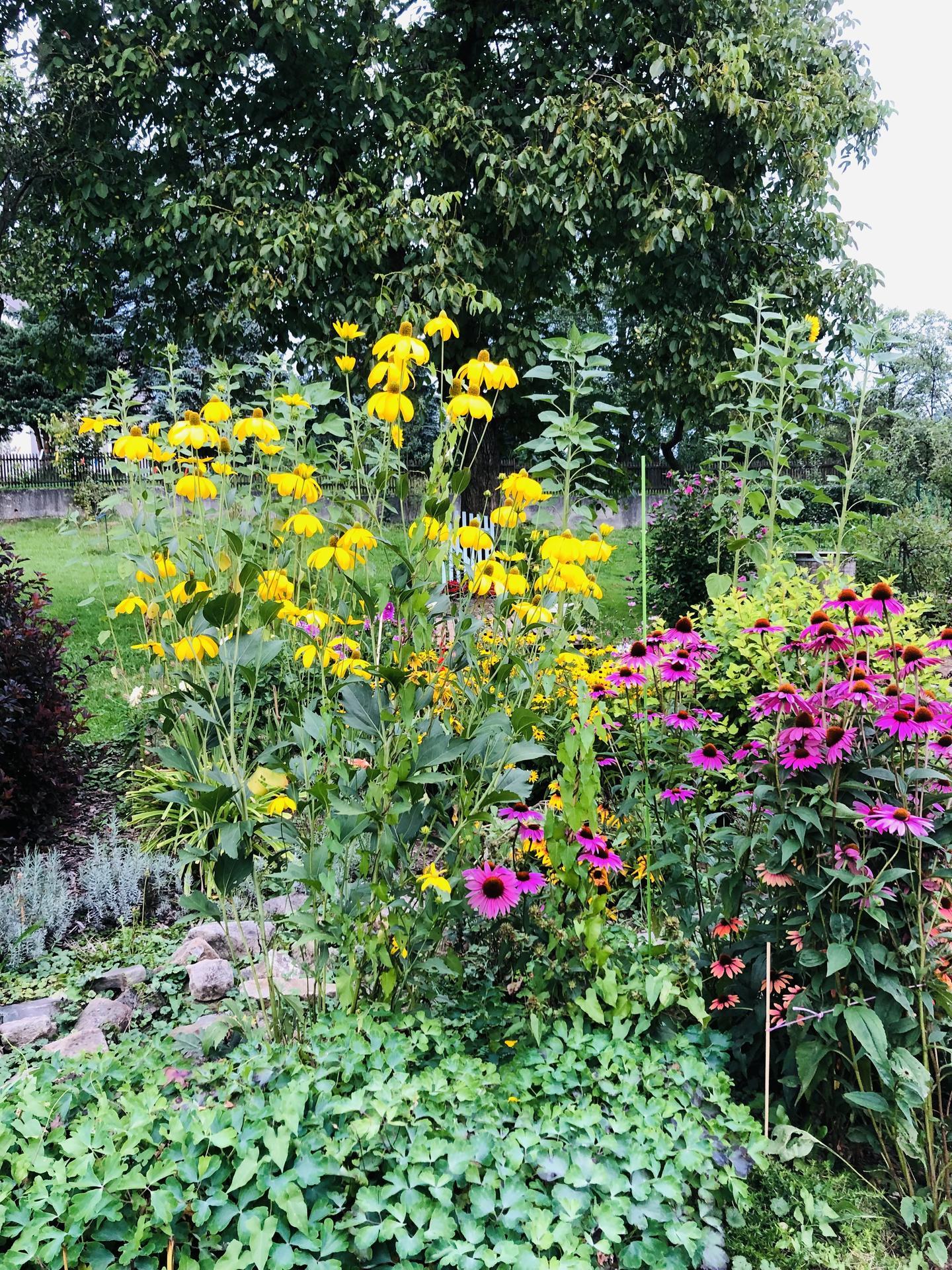 U nás doma a na zahradě 2021 - Obrázek č. 83