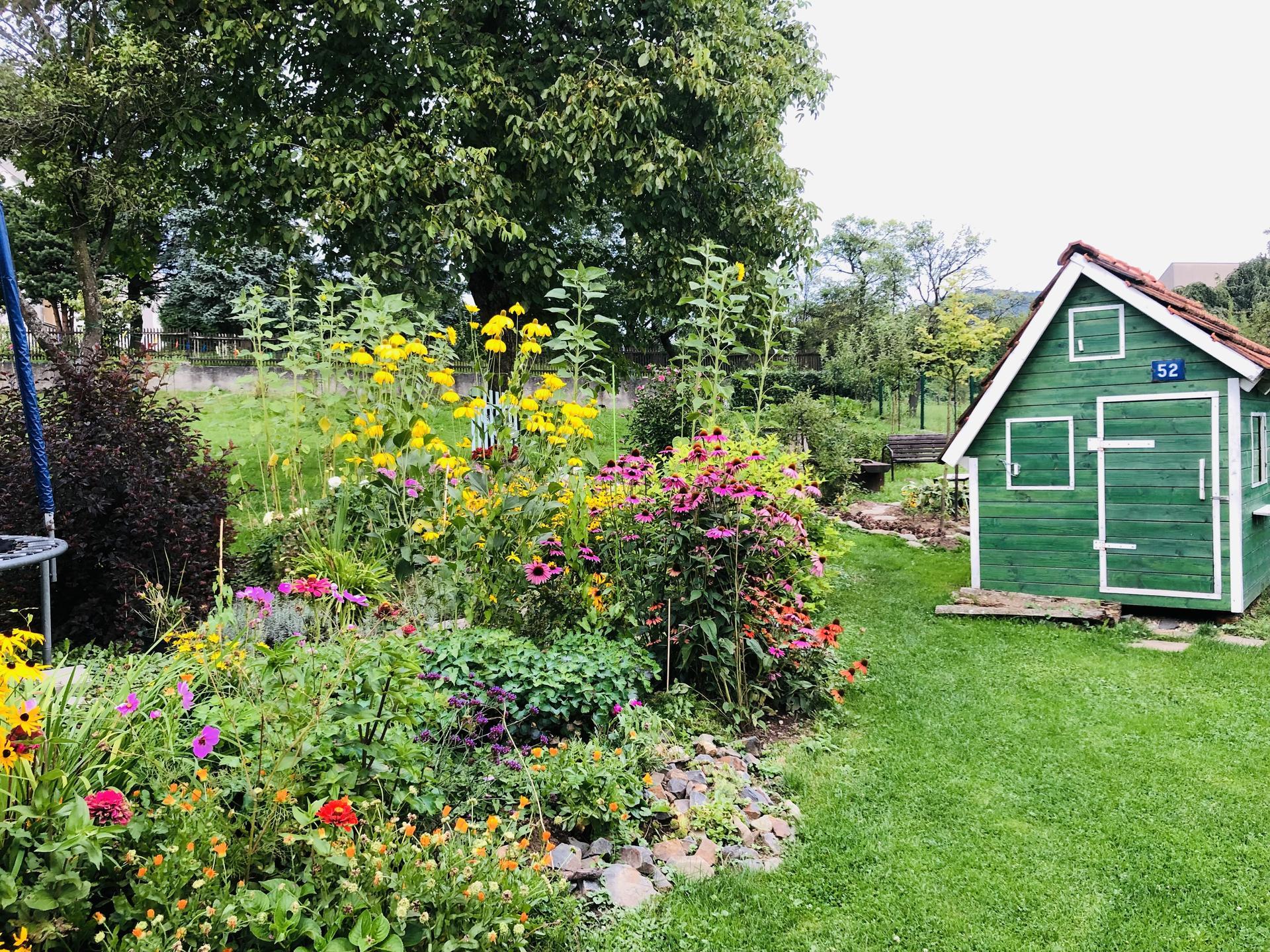U nás doma a na zahradě 2021 - Obrázek č. 82