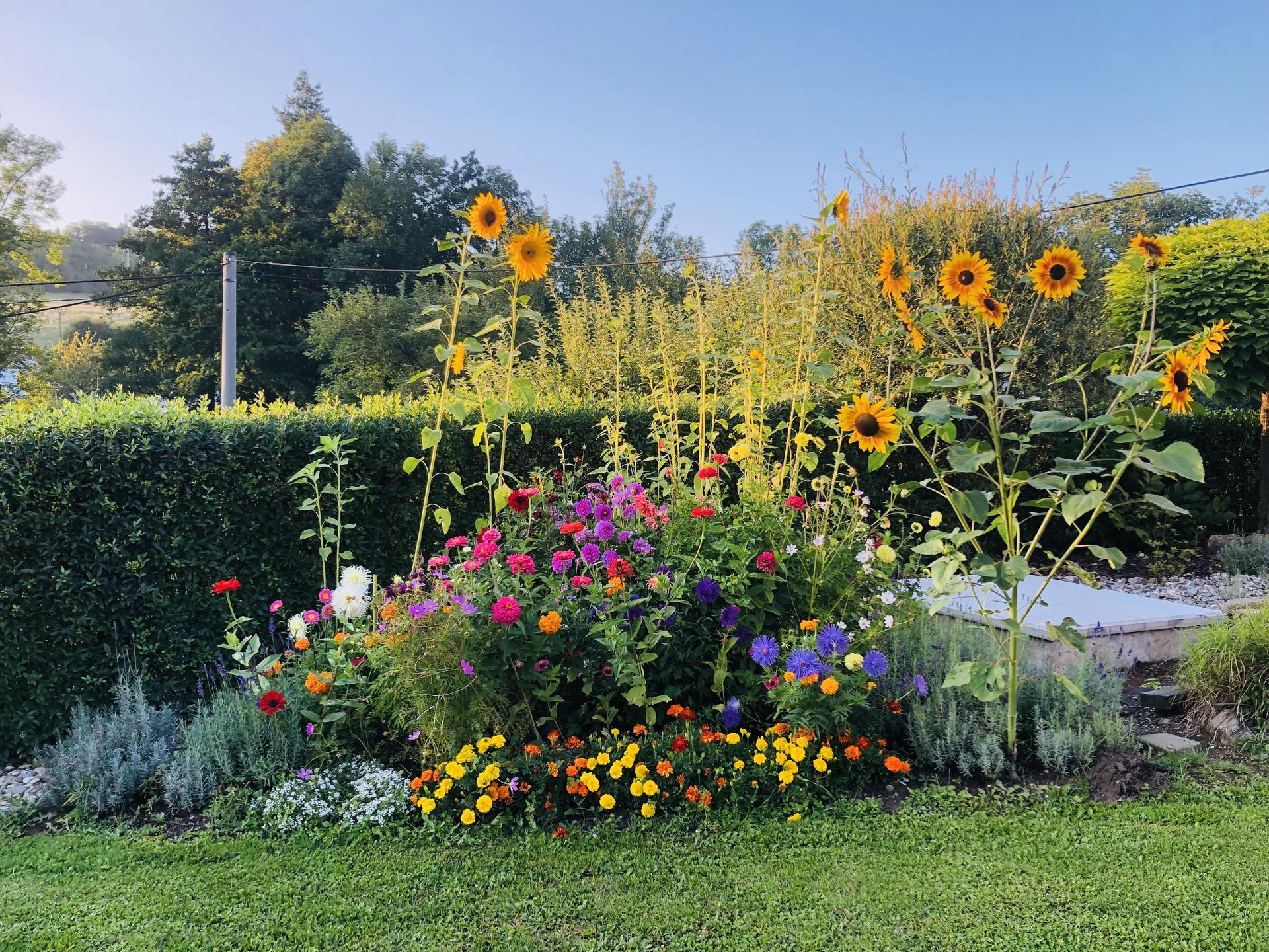 U nás doma a na zahradě 2021 - Obrázek č. 84
