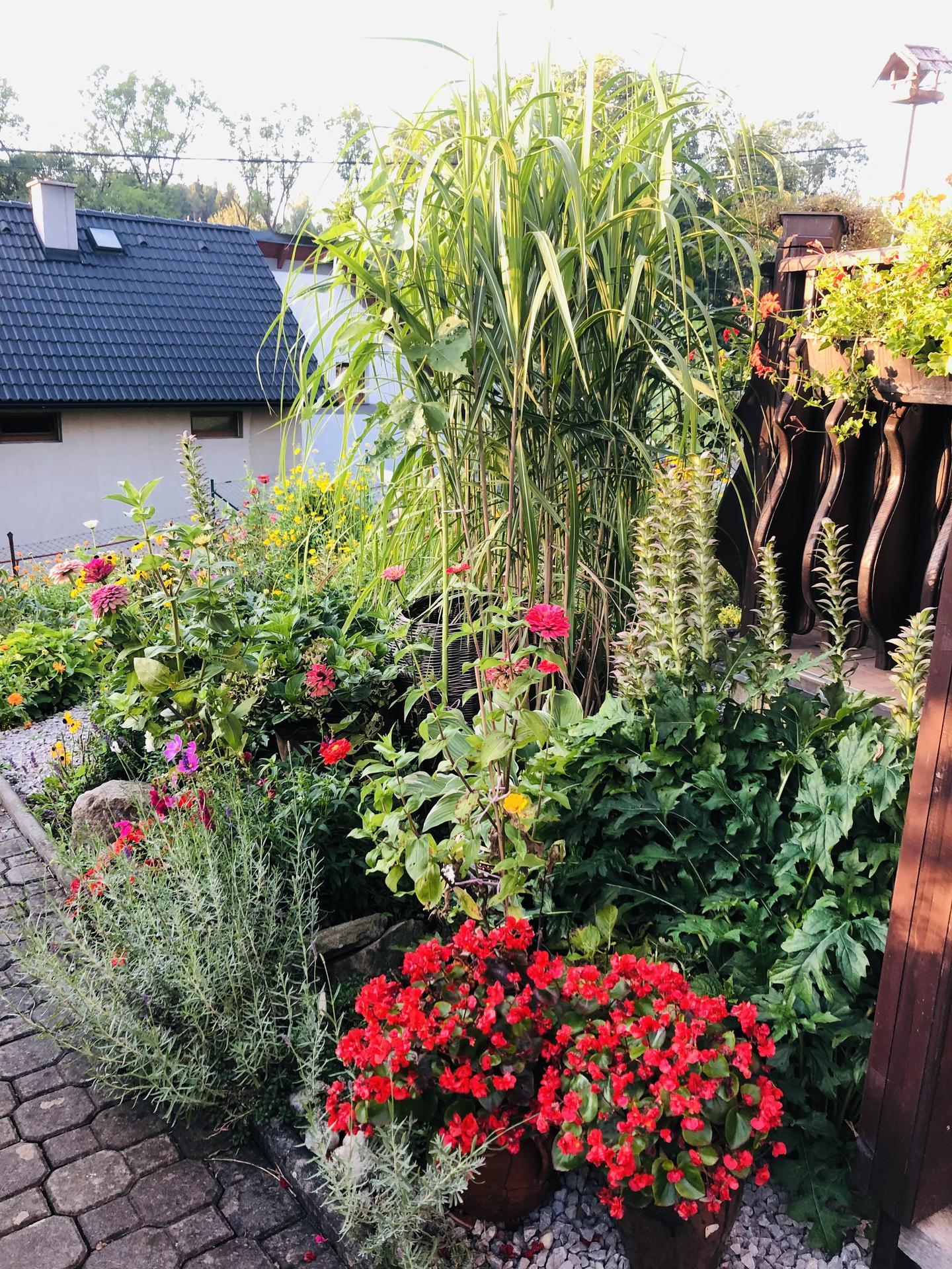 U nás doma a na zahradě 2021 - Obrázek č. 88
