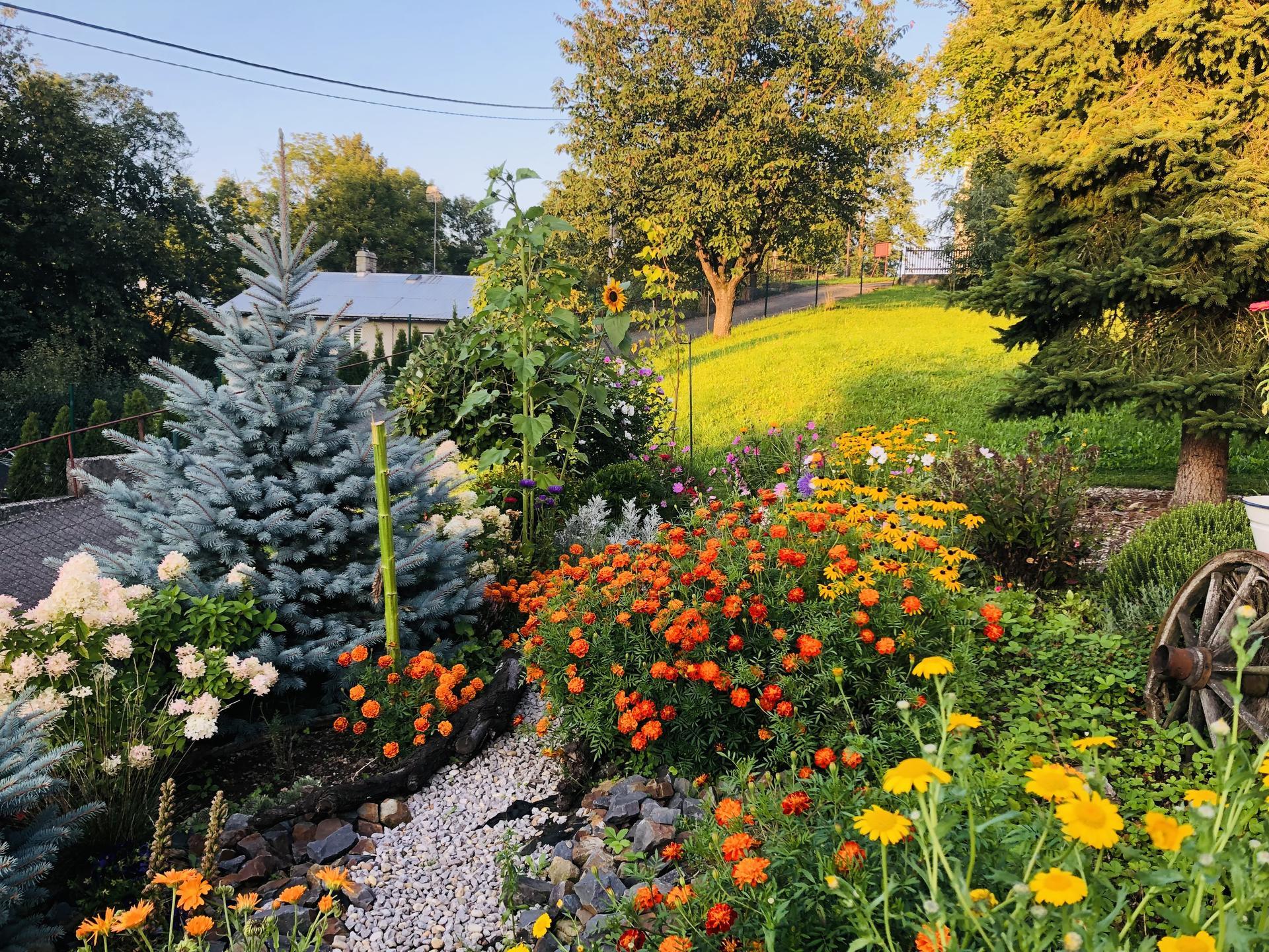 U nás doma a na zahradě 2021 - Obrázek č. 89