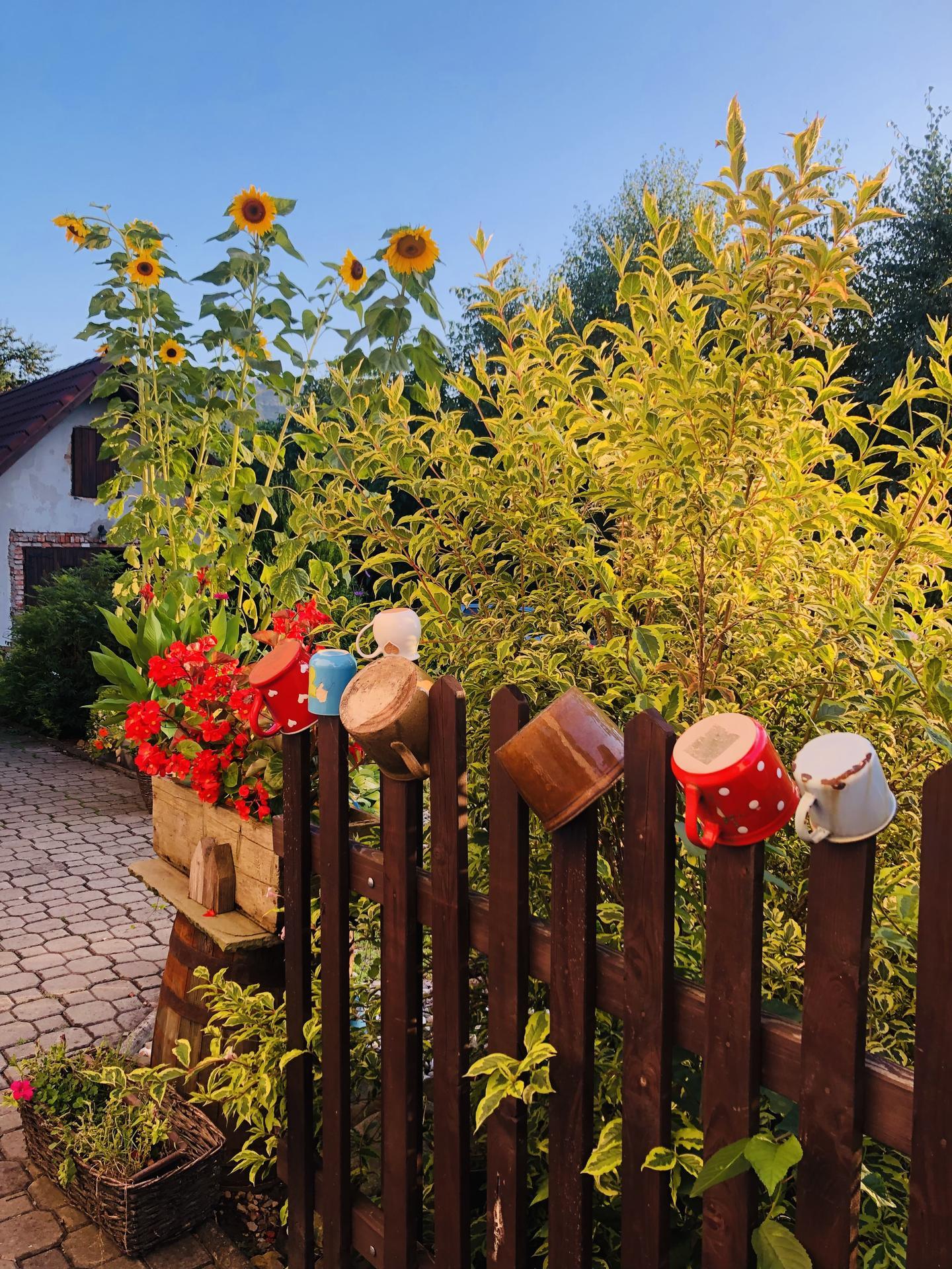 U nás doma a na zahradě 2021 - Obrázek č. 95