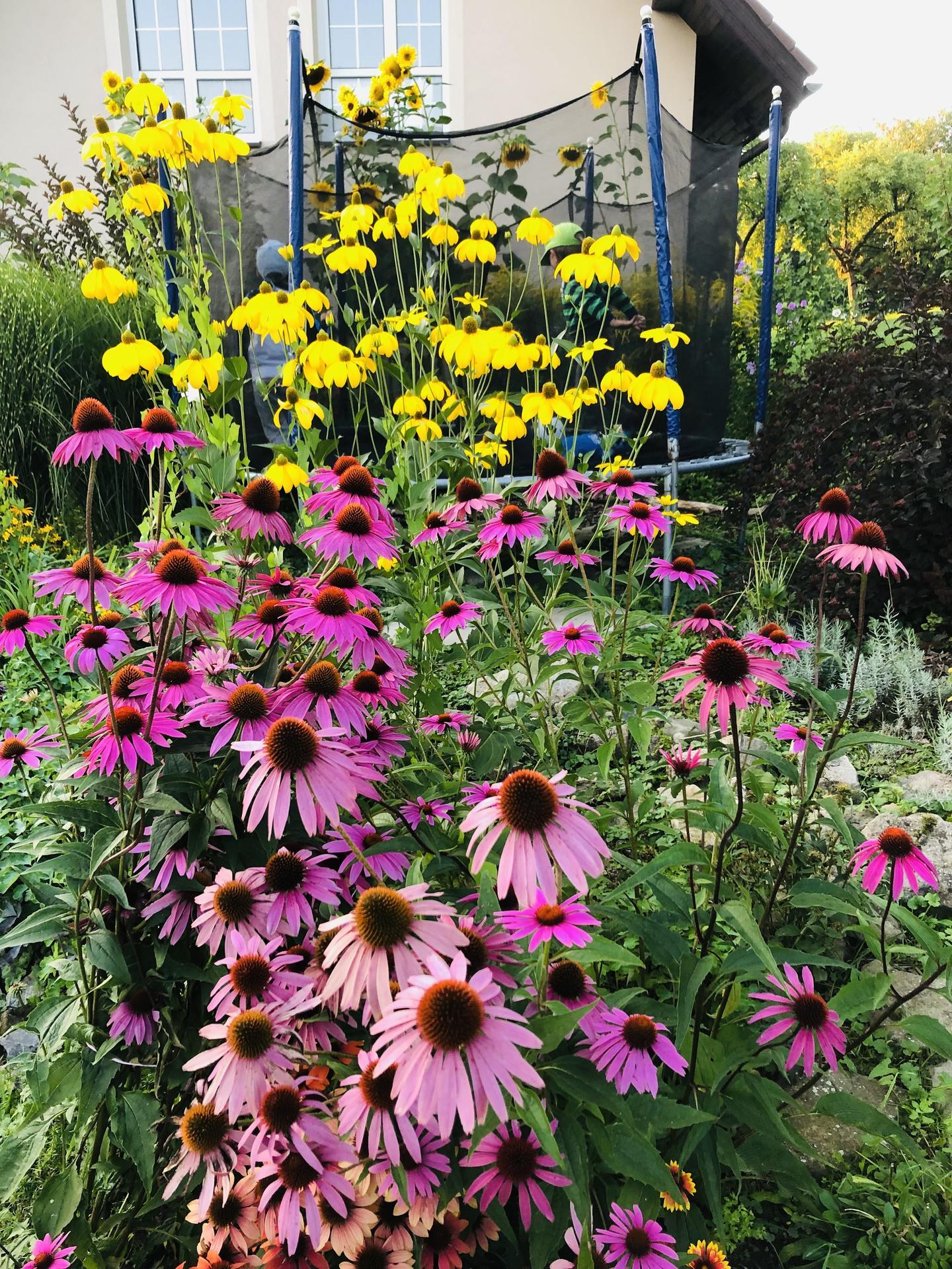 U nás doma a na zahradě 2021 - Obrázek č. 98