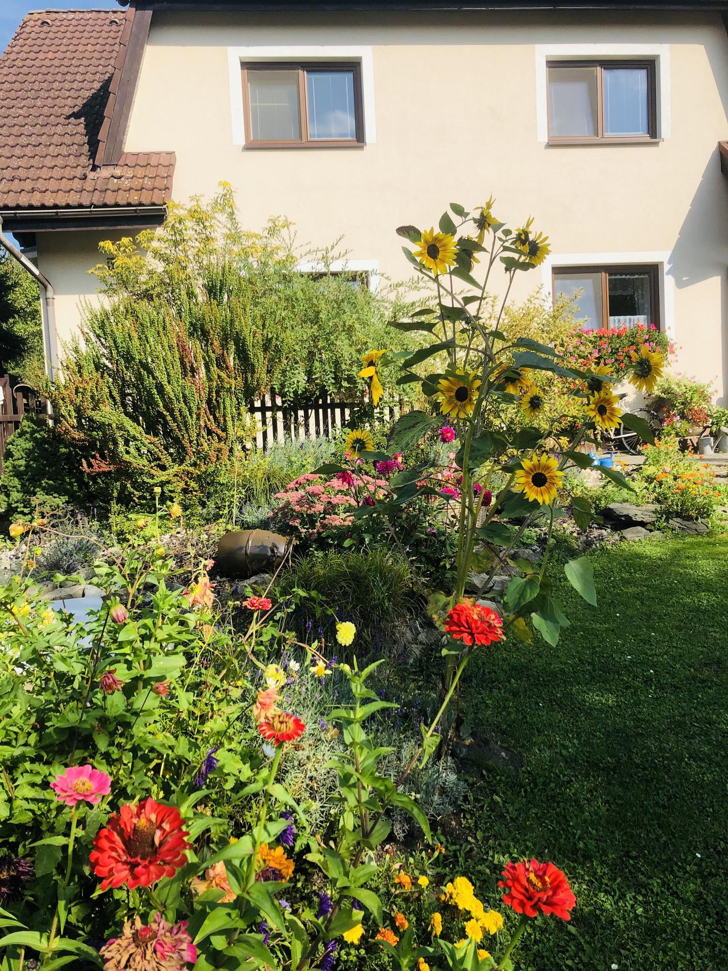 U nás doma a na zahradě 2021 - Obrázek č. 111