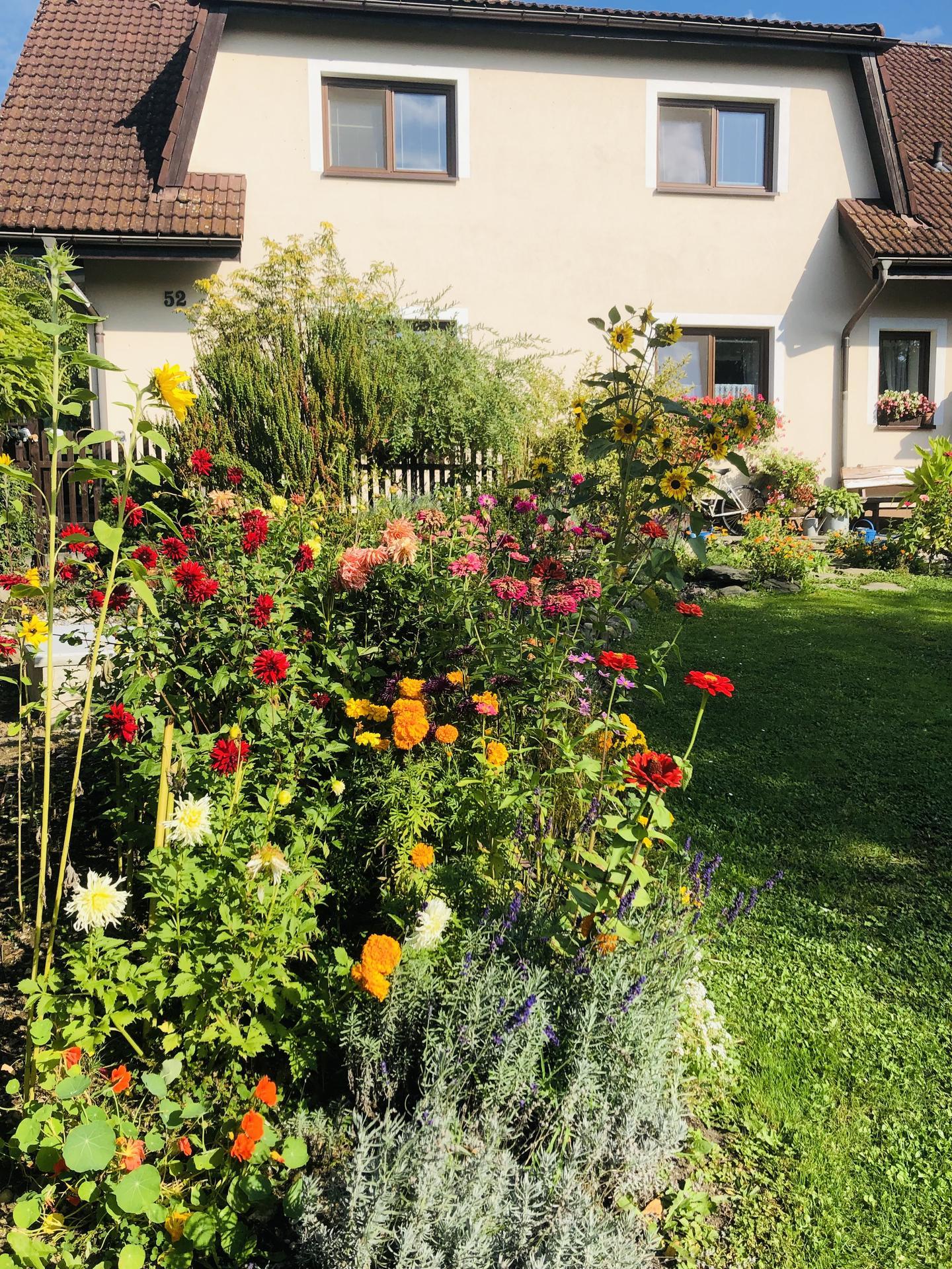 U nás doma a na zahradě 2021 - Obrázek č. 107