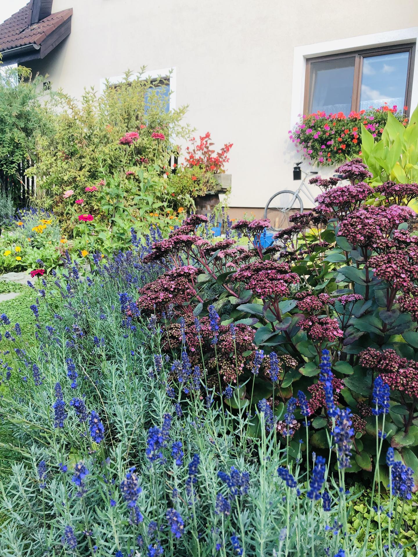 U nás doma a na zahradě 2021 - Obrázek č. 112