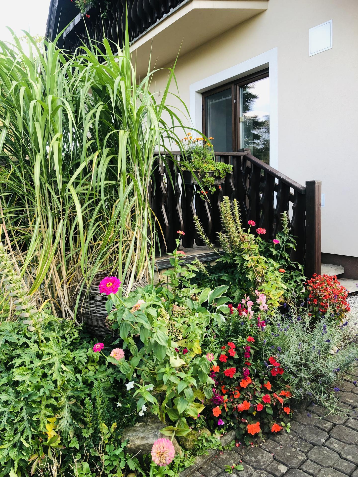 U nás doma a na zahradě 2021 - Obrázek č. 114