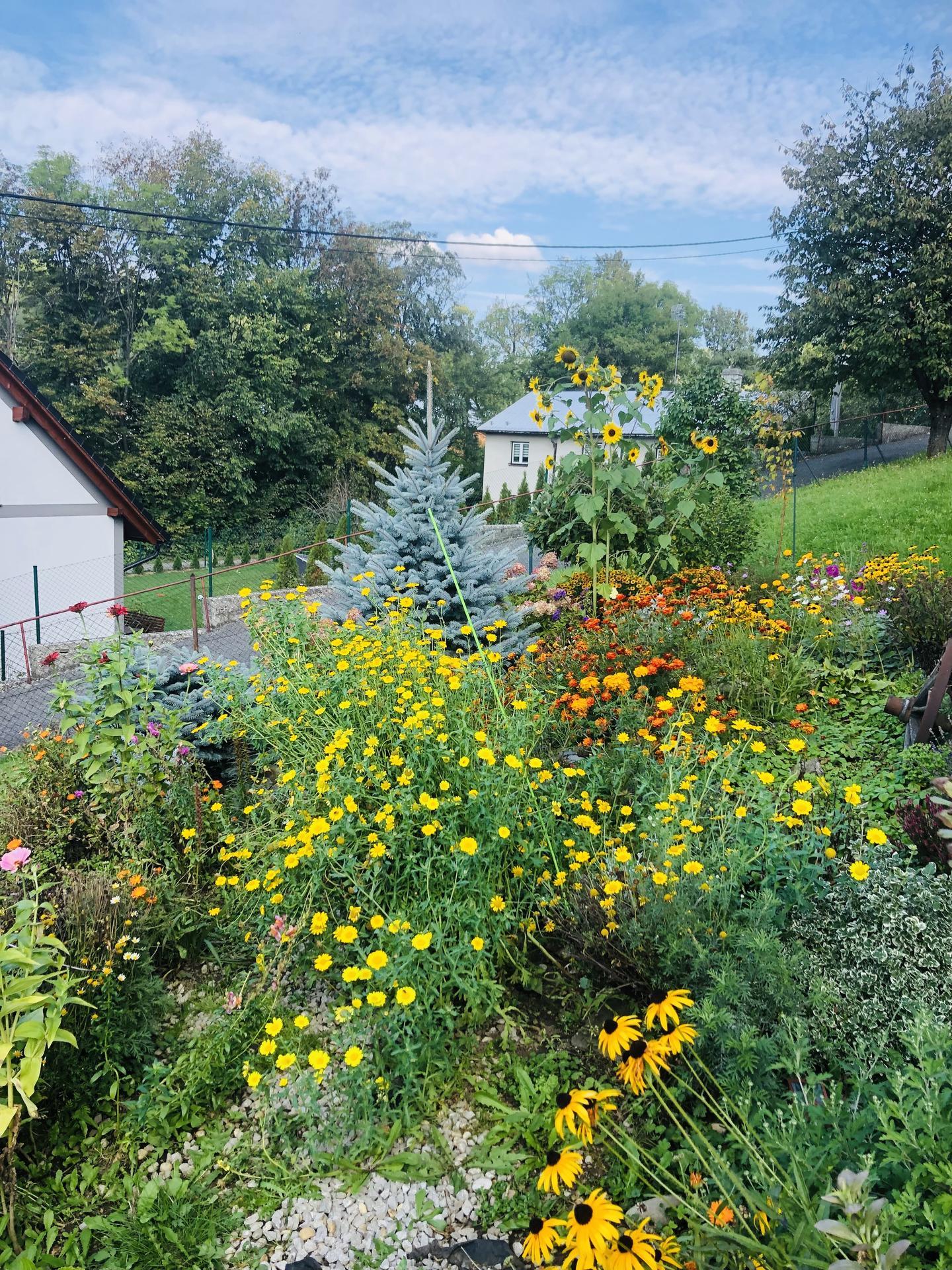 U nás doma a na zahradě 2021 - Obrázek č. 113