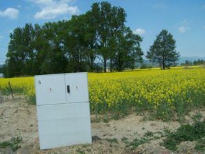 Tak to je náš pozemek, zatím na něm roste řepka :-))