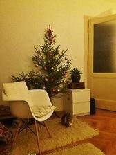 nejškaredější stromeček vybíráme schválně, aby nezůstal na Vánoce sám