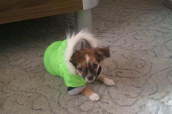 Náš malý Brumík v novém :))) :-D moc se mu tam nelíbilo..