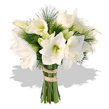 svatební květina vybraná - každopádně amaryllis!