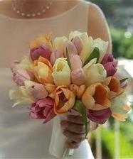 Miluju tulipány ale v září budu mít asi smůlu