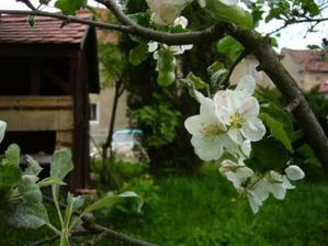 bývalý včelín a květ