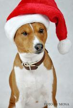 Náš Akimek se také zapojuje do vánočního šílenctvíííí :o))))