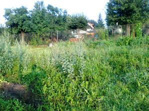 Pred rokom tu rastli zemiaky a teraz tu mame dzunglu.