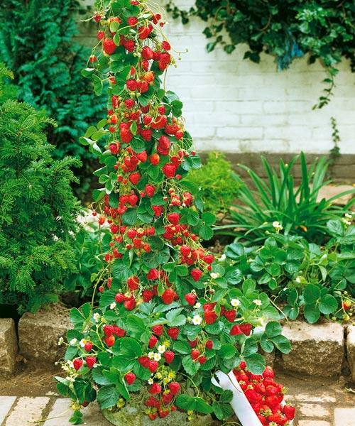 Zahrada - Tak to je výzva!