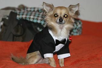 náš hlavný družba Bruno -dnes mu prisiel smoking ;-)