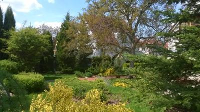 Další pohled do mé zamilované zahrady.