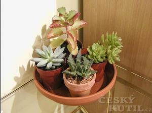 I na malém prostoru mohou být zajímavé rostlinky. A péče skoro nulová.