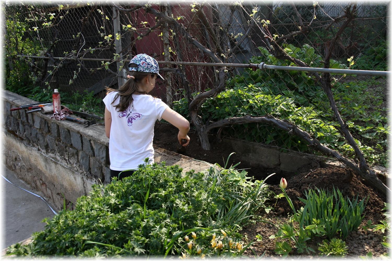 Vlastníma rukama - ze skleníku bazén - Dcera se taky zapojila a zahrabává díru od původních trubek ke skleníku.