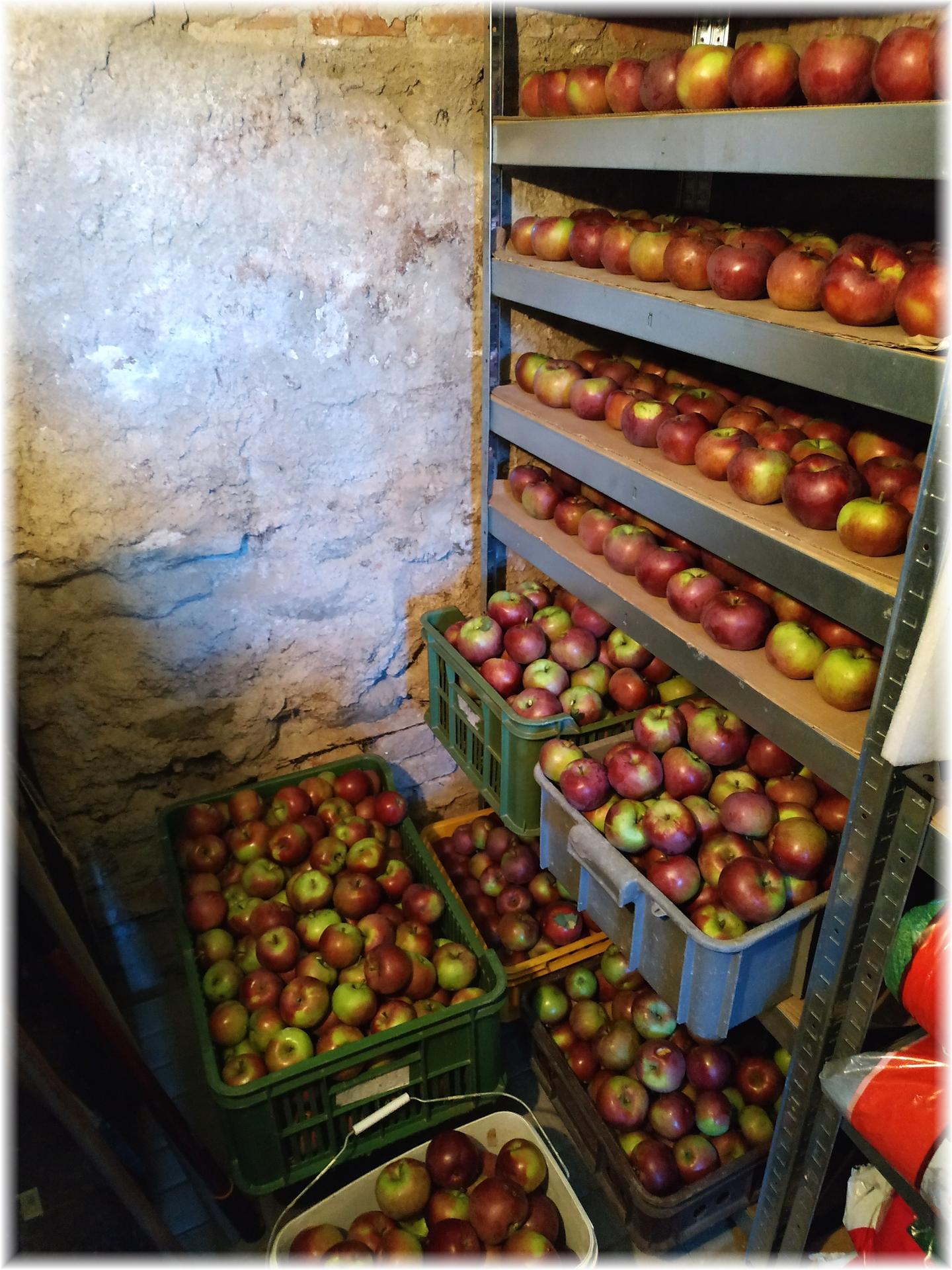 Dnes odpoledne bylo krásně, tak jsme ho strávili na zahradě. Část úrody od střechou, ale kam dáme zbytek netuším... Jablečná buchta na stole, jablečný mls a mošt v lednici, jablečná sezóna je tu :) A trvalky mi dělají pořád větší radost... - Obrázek č. 2