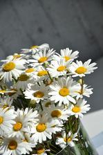 Nejkrásnější květiny na světě......pro mne tedy jednoznečně, v těsném závěsu pomněnky