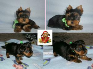 náš největší a zároveň nejmenší vánoční dáreček :)